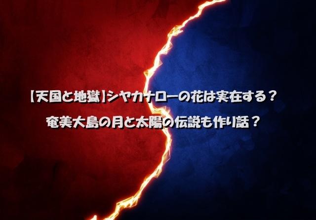 【天国と地獄】シヤカナローの花は実在する?奄美大島の月と太陽の伝説も作り話?